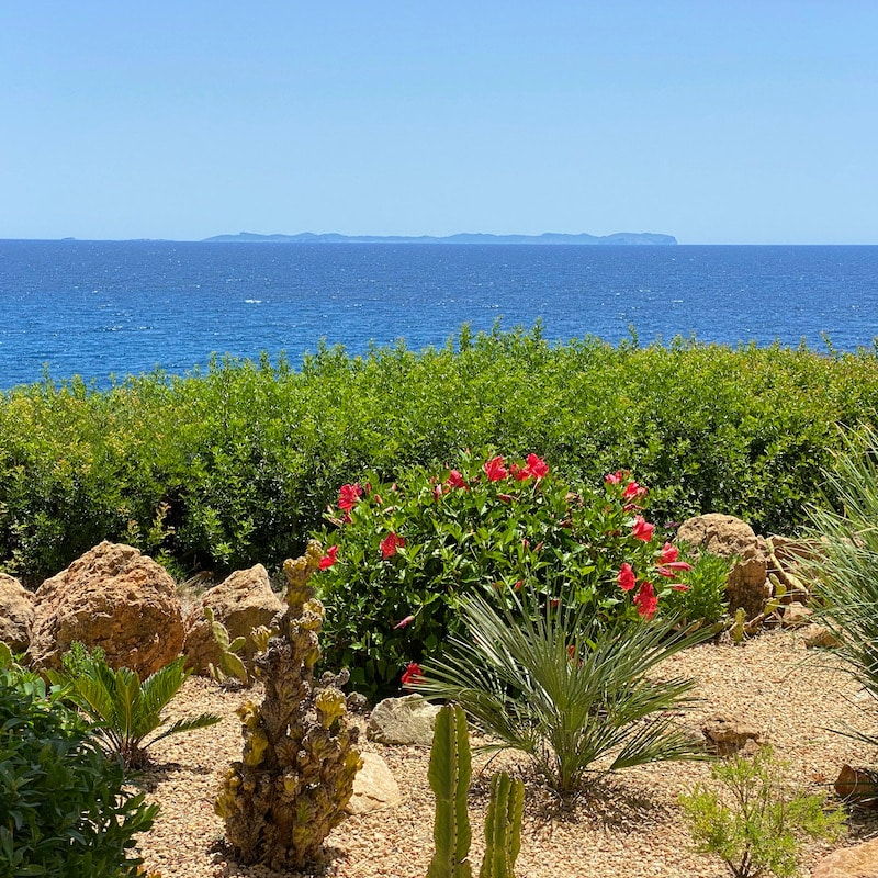Patrick Lynen Meister der Veränderung - Insel Mallorca